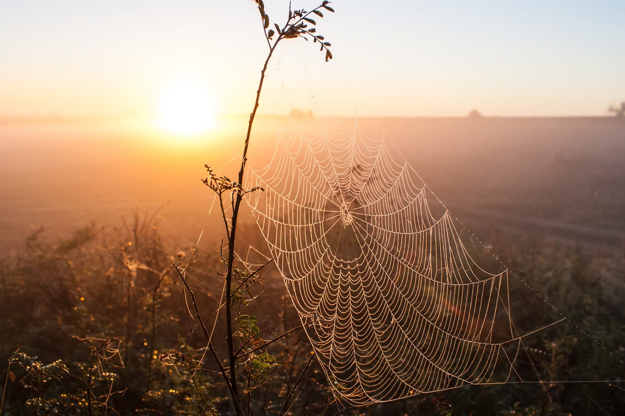 Autumn webs…