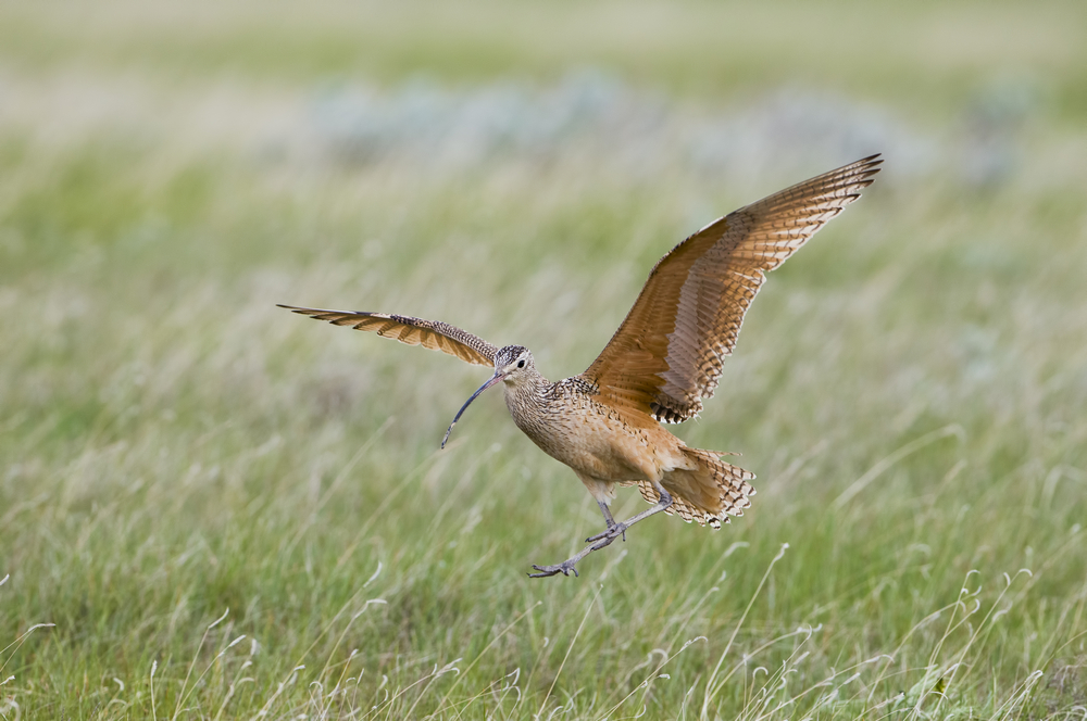 Birds of the Shropshire Hills 2