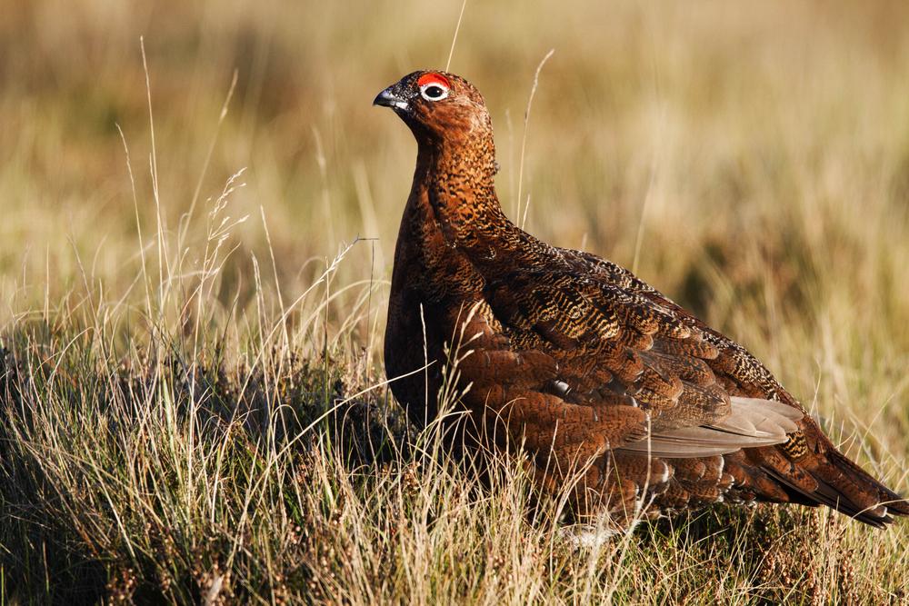 Birds of the Shropshire Hills
