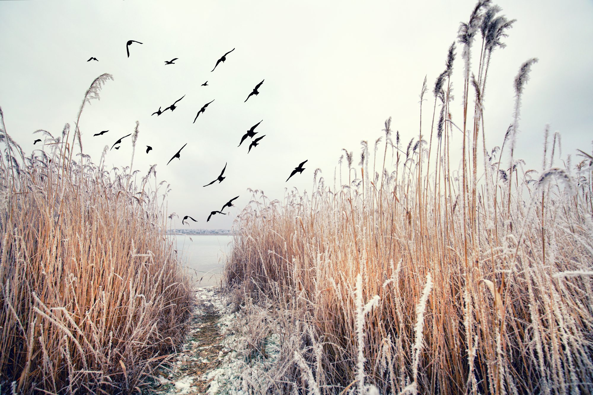 Birds of the wetland edge