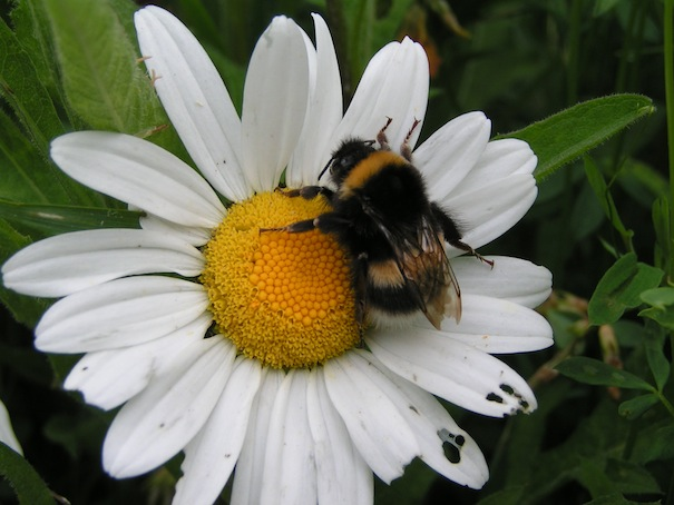 bee_at_work