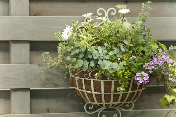 good gardening tips may and june