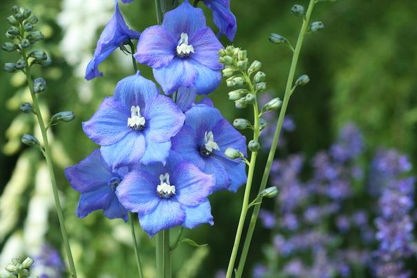gardening tips for september and october