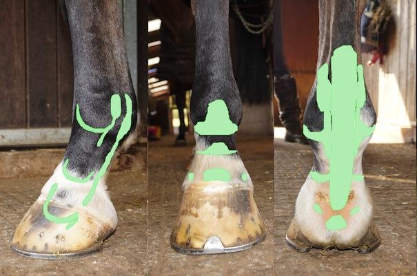 horse_distal_limb