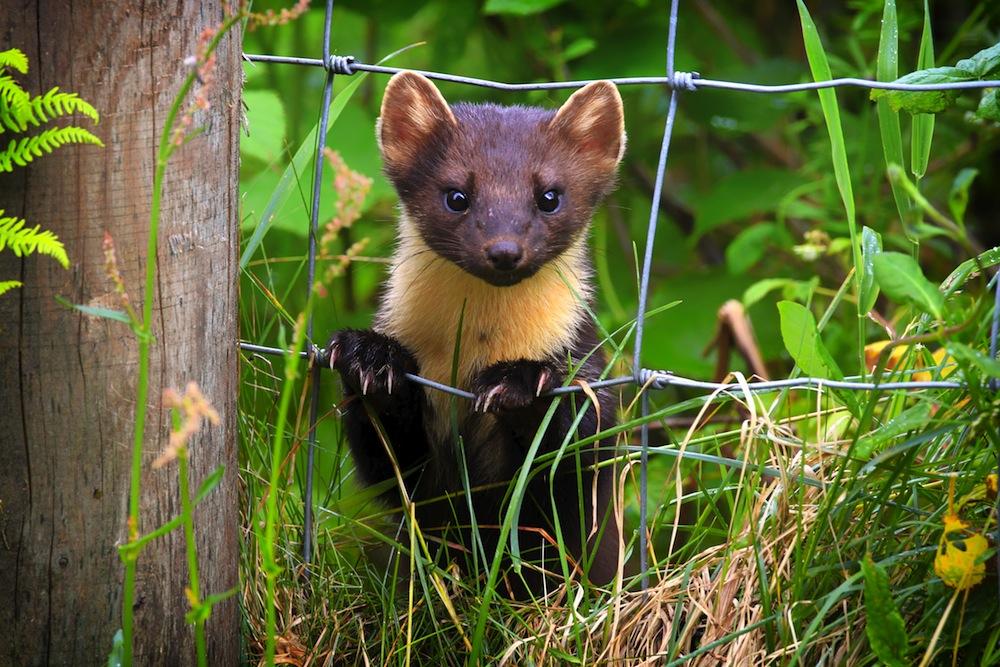 Nocturnal wildlife in Shropshire
