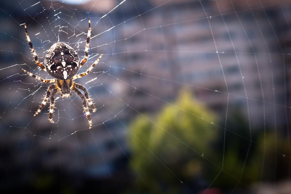 Autumn webs… 1