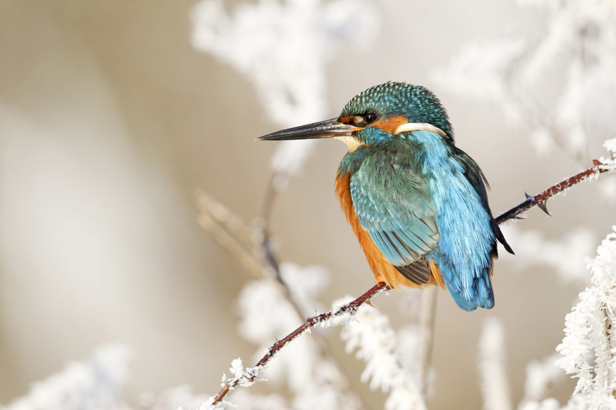 Birds of the wetland edge 1