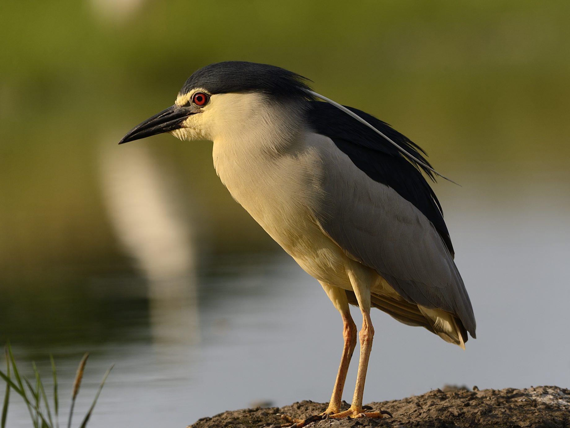 Birds of the wetland edge 3