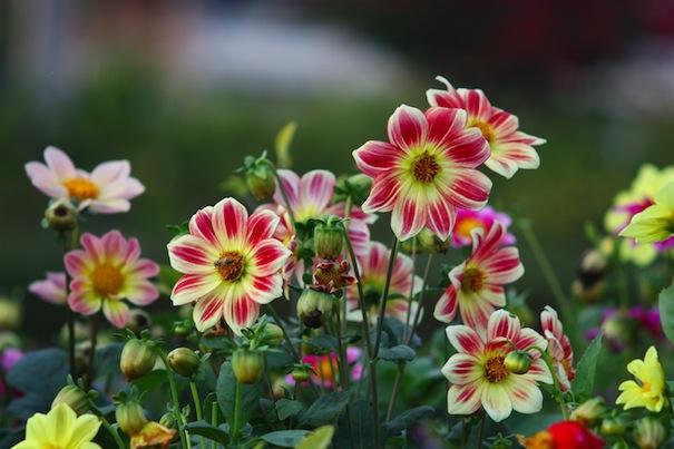 gardening-tips-for-april