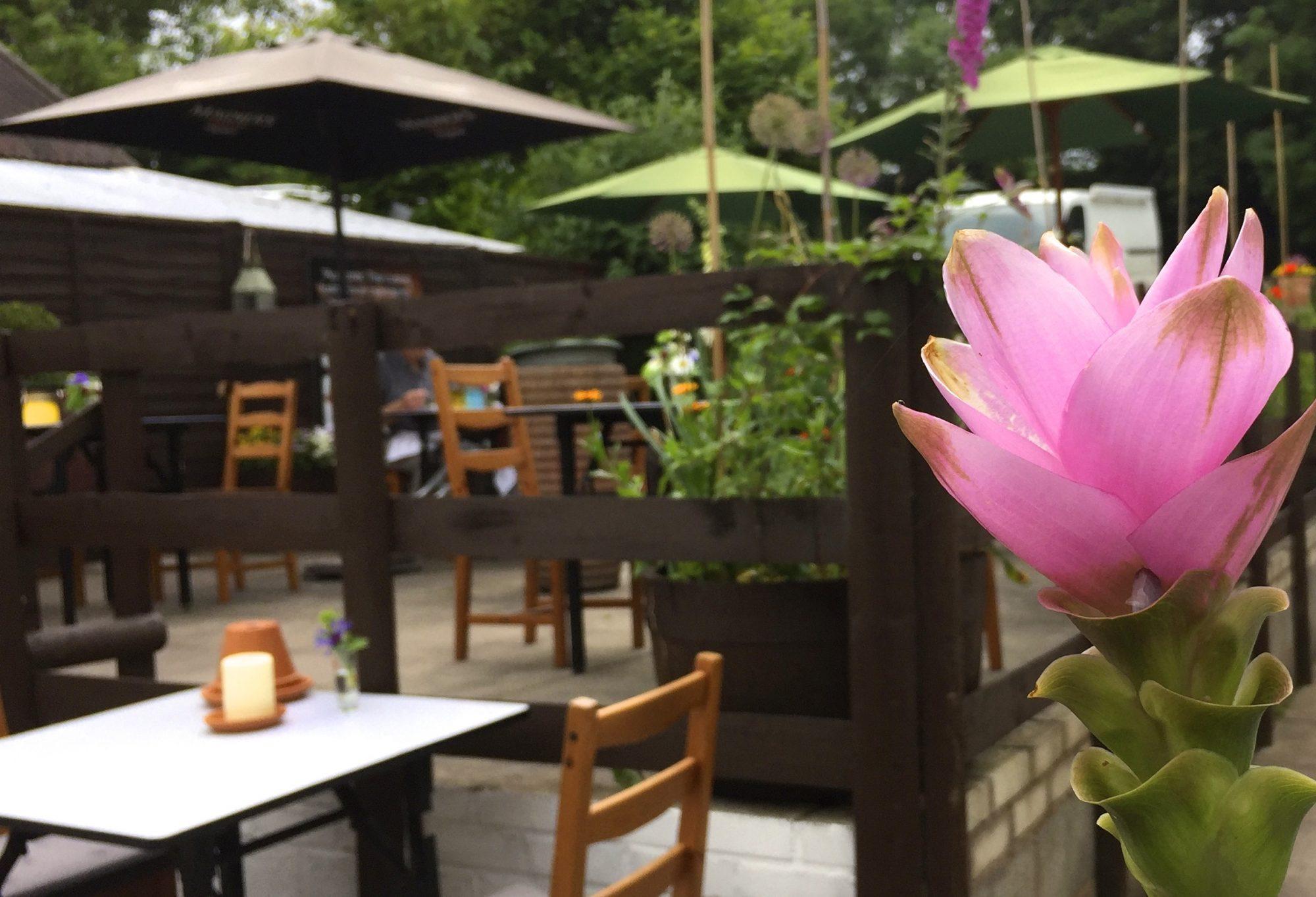 RESTAURANT REVIEW: The King and Thai, Broseley 2