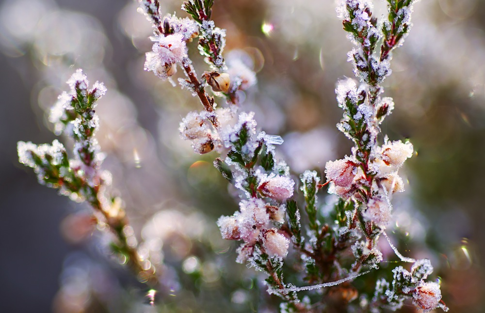 good gardening tips november and december