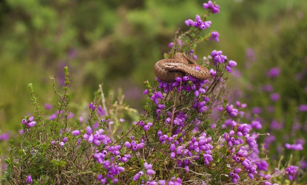 Wildlife Diary - Reptilia