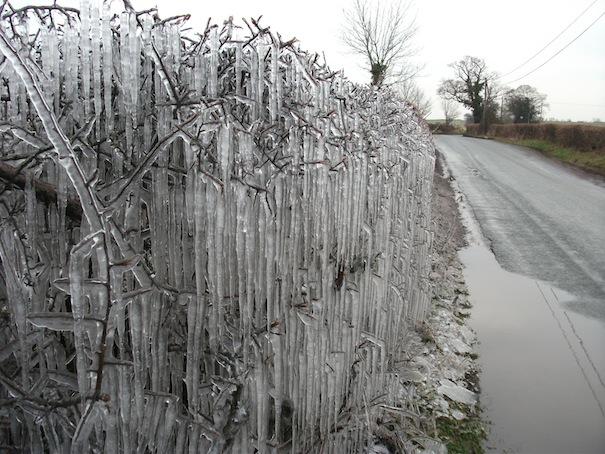 wildlife diary frozen hedge